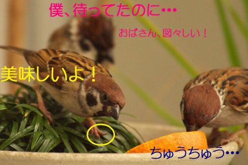 140_20121230221418.jpg