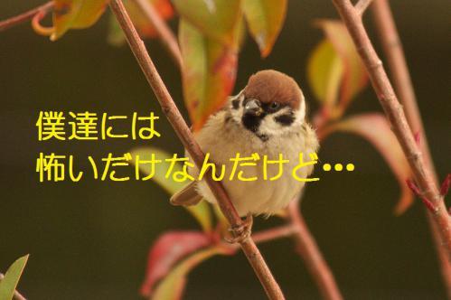 140_20130105211227.jpg