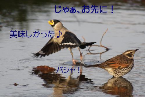 140_20130121215431.jpg