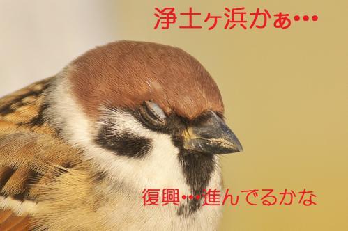 145_20121124215717.jpg