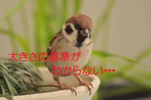145_20121222194753.jpg
