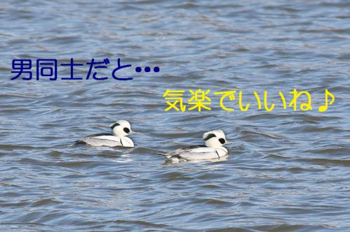 145_20121227213645.jpg