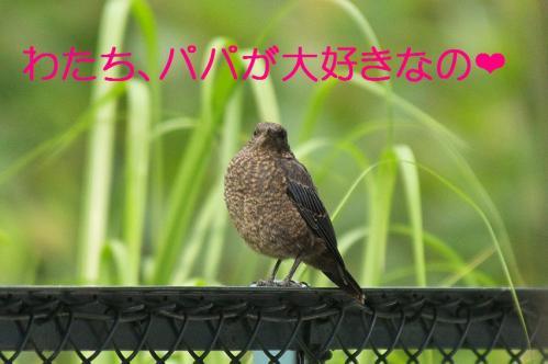 150_20120612215224.jpg