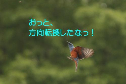 150_20120613233725.jpg