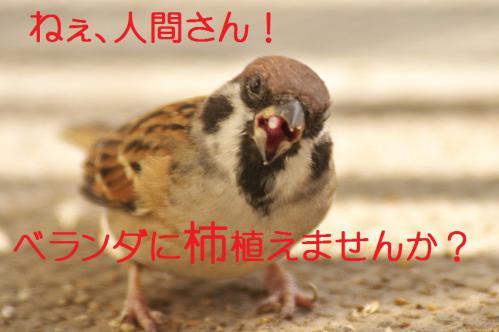 150_20121030223320.jpg