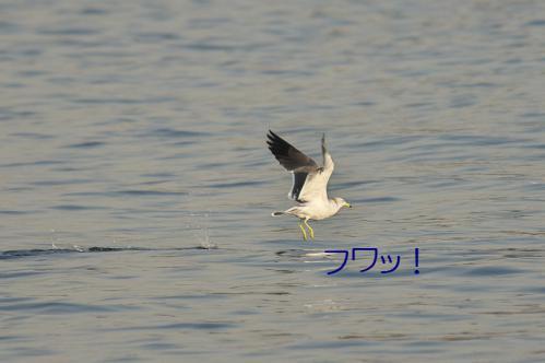 150_20121125192434.jpg