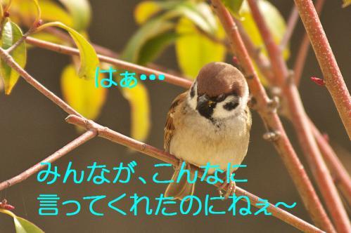 150_20121206193603.jpg