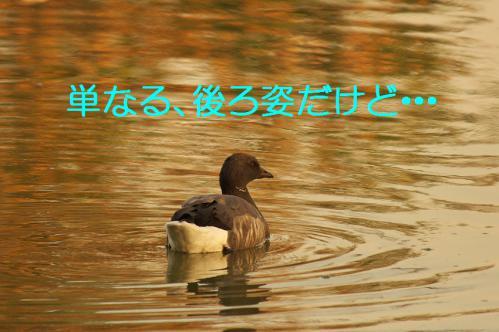 150_20121214214941.jpg
