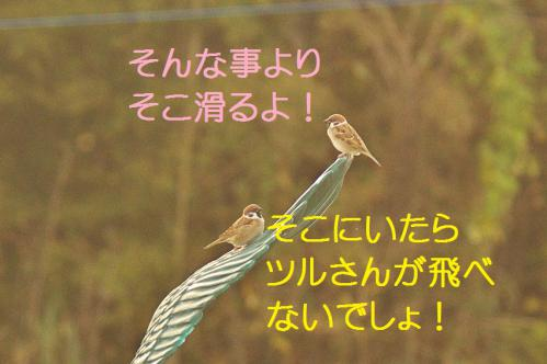 150_20121217024710.jpg