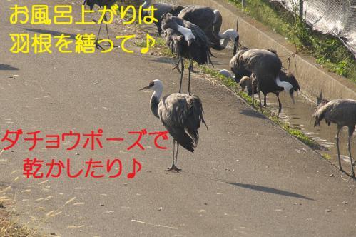 150_20121218215728.jpg