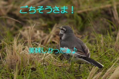 150_20121220193903.jpg