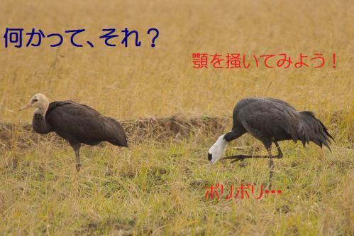 150_20121221215142.jpg