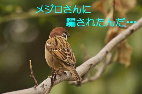 150_20121225223514.jpg