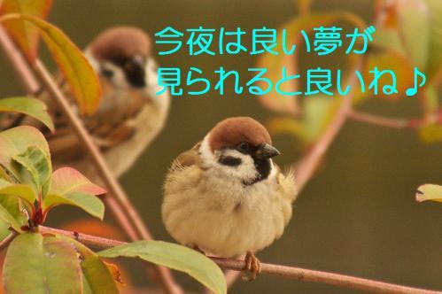 150_20130105211231.jpg