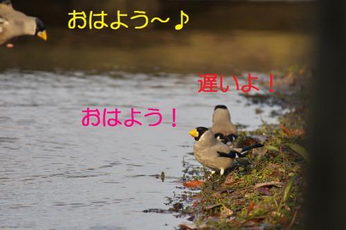 150_20130121215434.jpg
