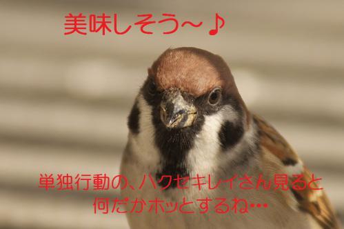 155_20121220193906.jpg