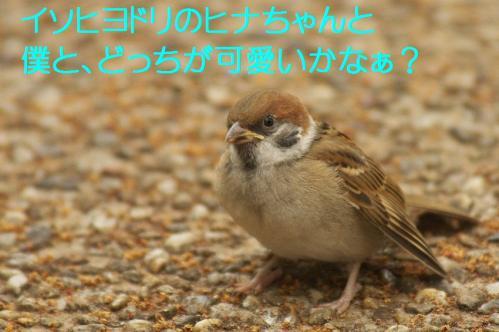 160_20120611231925.jpg