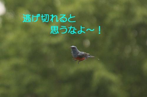160_20120613233724.jpg