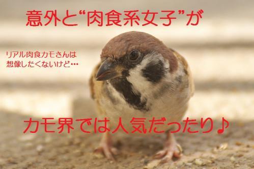 160_20121112215547.jpg
