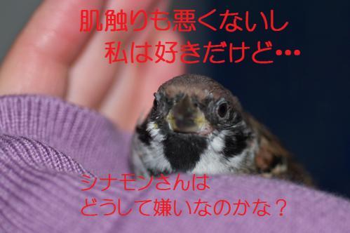160_20121117212705.jpg