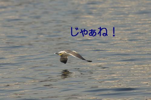 160_20121125193011.jpg