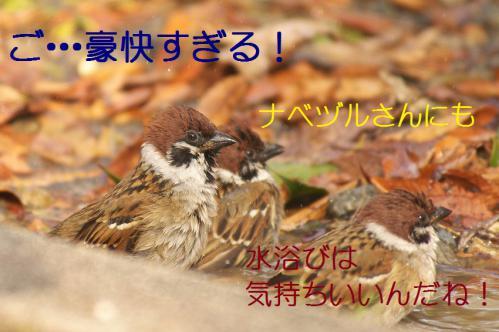 160_20121218215806.jpg