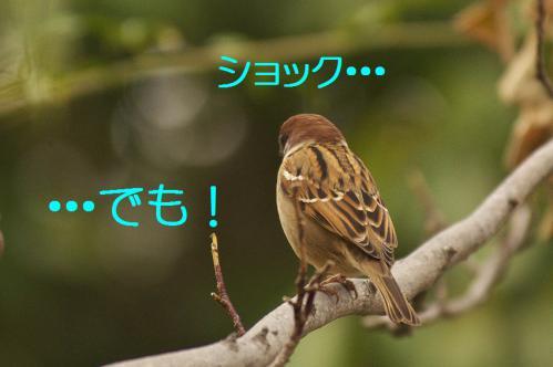 160_20121225223614.jpg