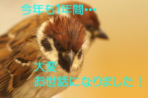 160_20121230221513.jpg
