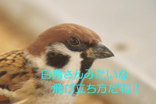 165_20121125193015.jpg