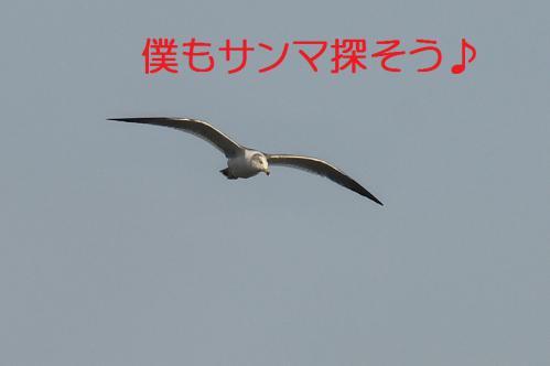 170_20121125193017.jpg