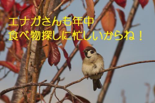 170_20121213214731.jpg
