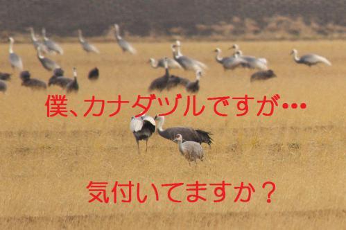 170_20121215200933.jpg