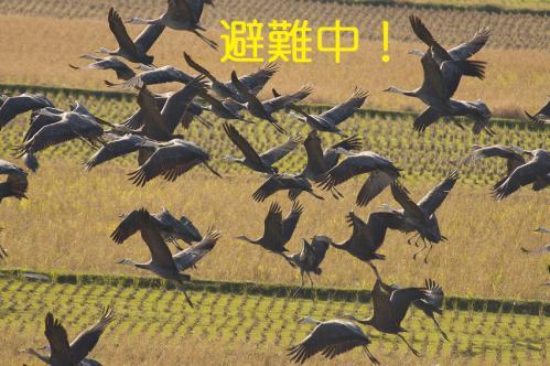 170_20121216203023.jpg