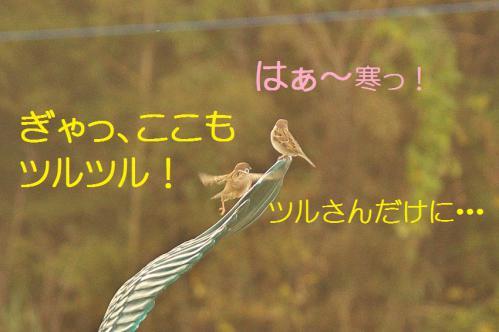 170_20121217024821.jpg