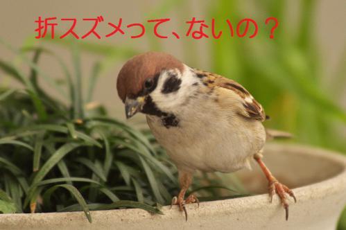 170_20121222194758.jpg