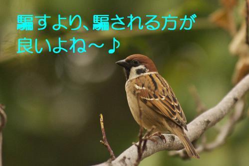 170_20121225223617.jpg