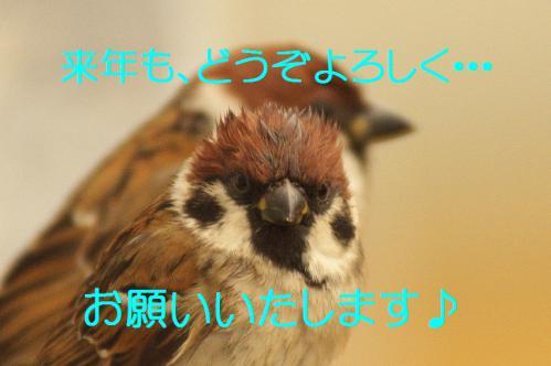170_20121230221517.jpg