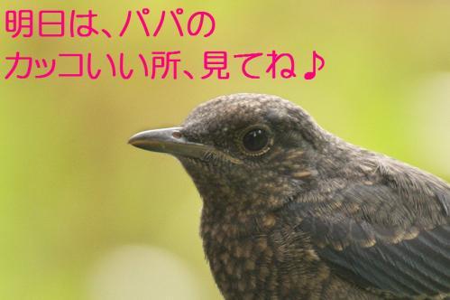 180_20120612215221.jpg