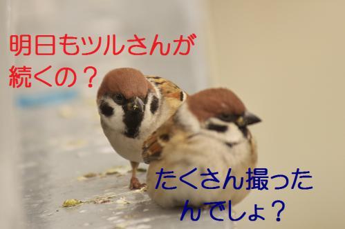 180_20121215201017.jpg