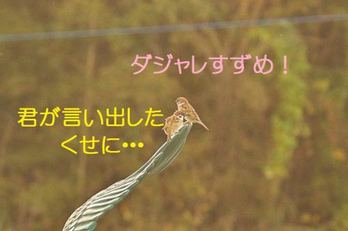 180_20121217024824.jpg