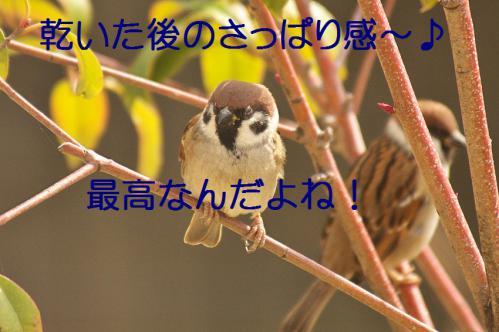 180_20121218215813.jpg