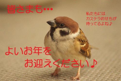 180_20121230221520.jpg