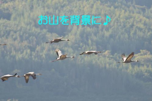 190_20121216203348.jpg