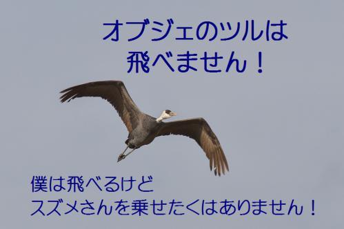 190_20121217024826.jpg