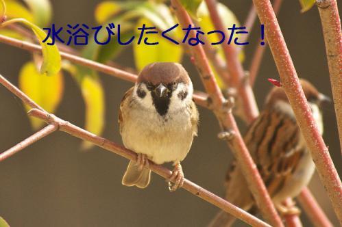 190_20121218215816.jpg