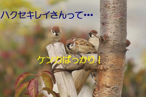 200_20121205221518.jpg