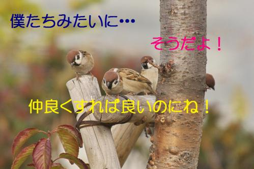 210_20121205221604.jpg