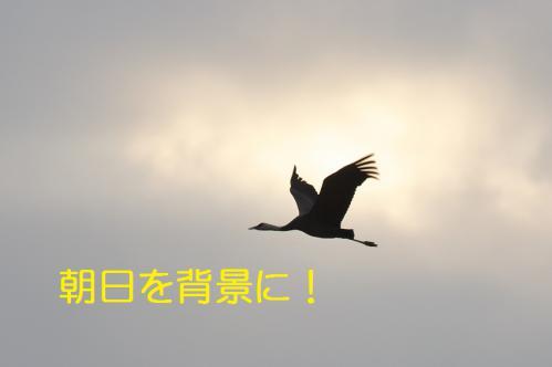 210_20121216203352.jpg