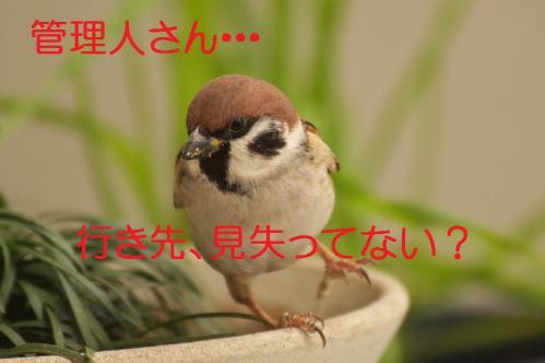 210_20121222194900.jpg