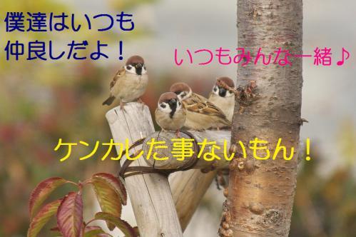 220_20121205221611.jpg